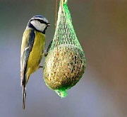Alimenti per uccelli selvatici