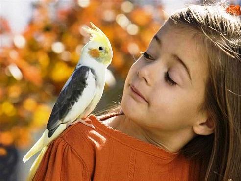 Bambini ed uccelli