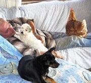 Guarire grazie agli animali