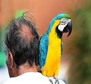 Legame uomo-uccelli