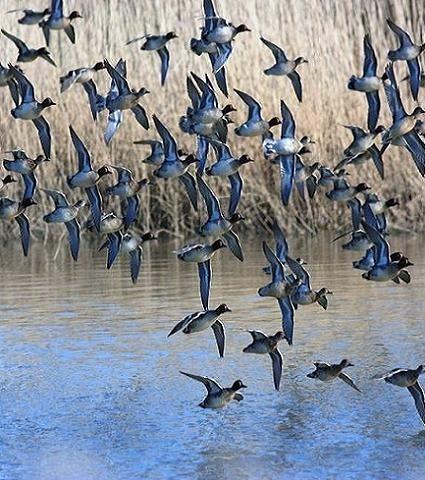 Migrazione dell'avifauna
