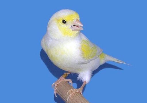 Uccelli E Volatili Page 12