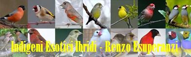 rubrica risposte a quesiti uccelli IEI