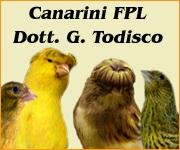 Il Portale Italiano dell'Ornitofilia V&A - Rubrica del Dott. Todisco Canarini di FPL